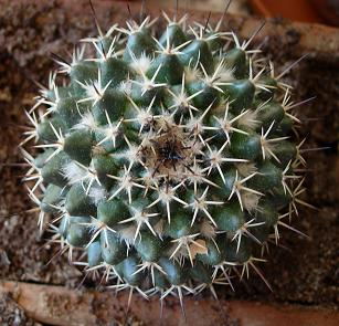 Piante grasse - Le piante grasse si possono tenere in casa ...
